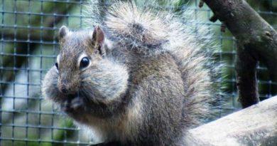 Felsenhörnchen im Neunkircher Zoo. (Foto: Nicole Hartmann)