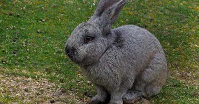 Nicht nur Eier und Hasen zu Ostern. (Foto: Thomas Reinhardt)